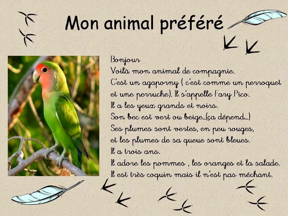 description d un animal domestique